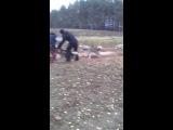 тренировка хаски