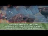 Красивое чтение Корана - Сура аль-Хашр аяты 18-24